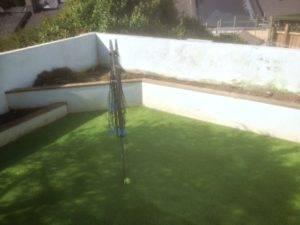 new grass in garden