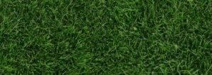 Parallax-Grass
